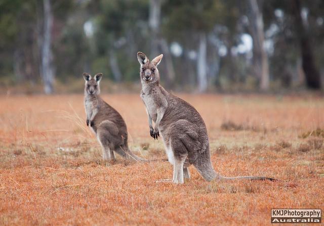 PROKMJPhotography Australia