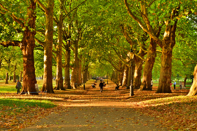 Londra-Green Park Avenue in Autumn