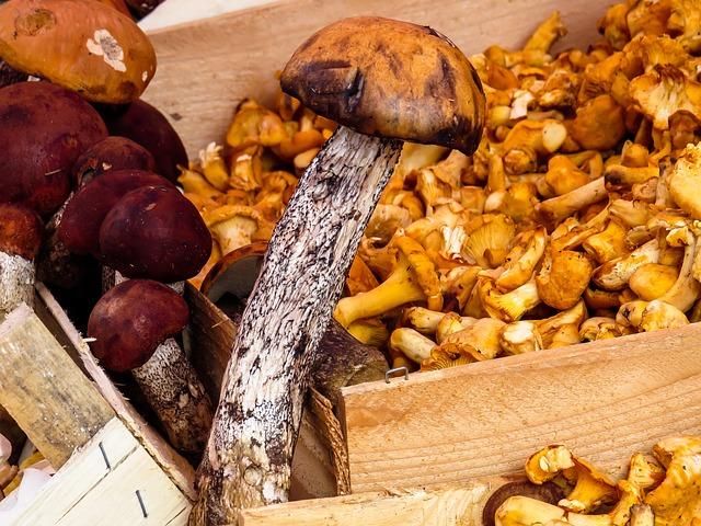 fiere gastronomiche-mushrooms-1603666_640