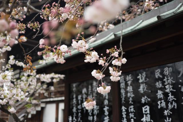 Giappone - photo-1461727885569-b2ddec0c43