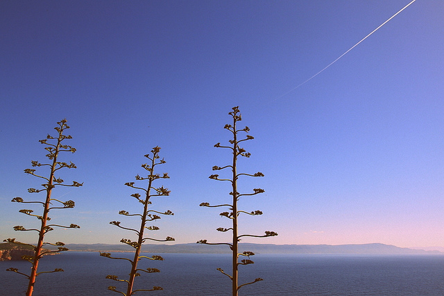 Vacanza Sardegna7