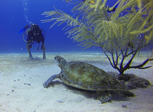 diver-549369_640