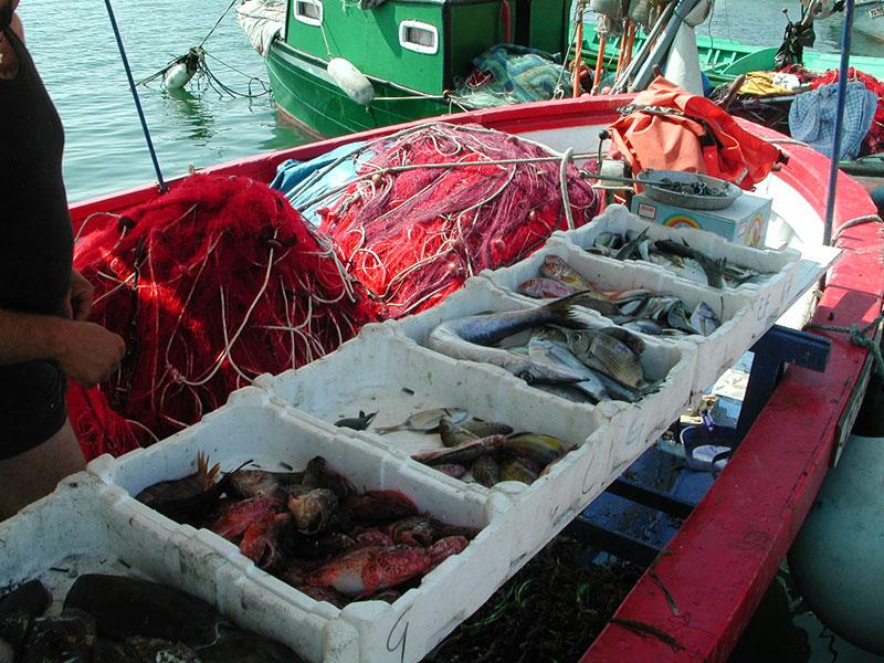 banco-pesce-sardegna
