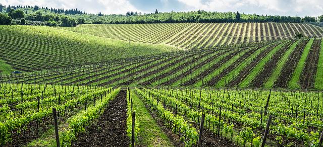 Toscana - Doug Jones