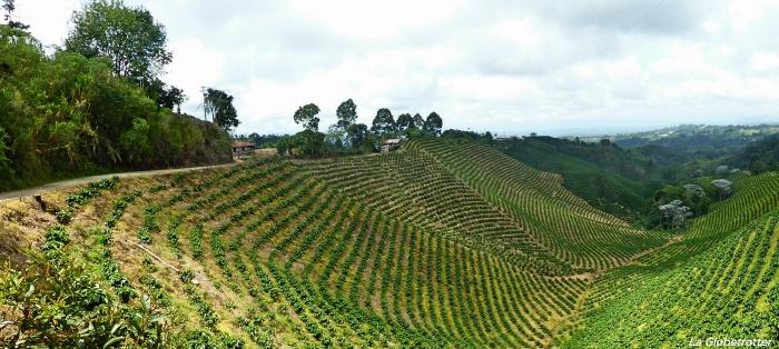 © La Globetrotter - Piantagioni di caffè a Filandia, Colombia