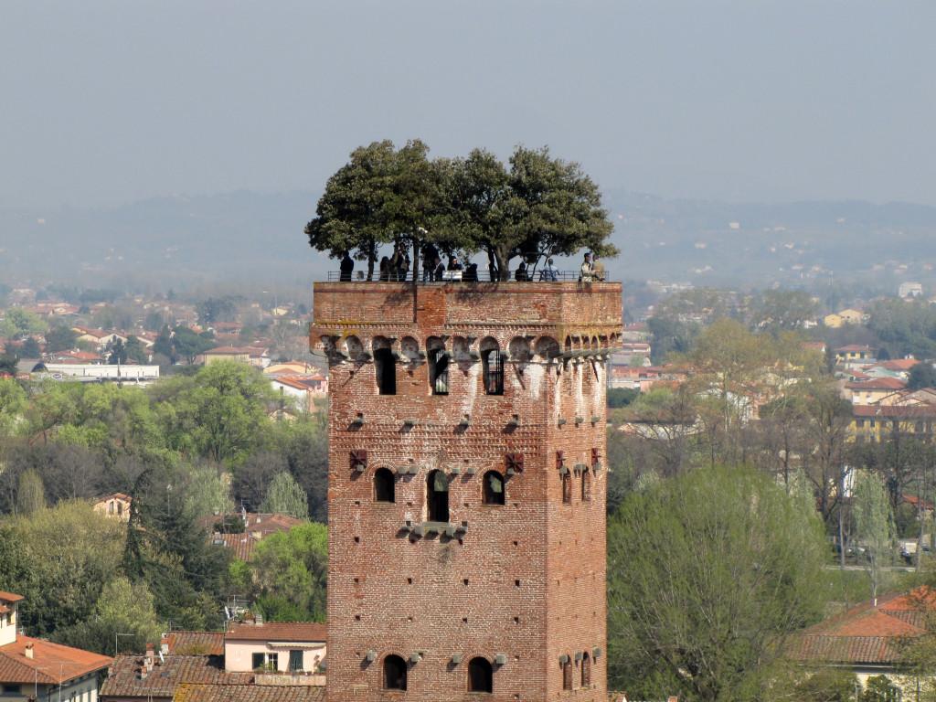 Torre_Guinigi,_Guinigi_Tower,_Lucca
